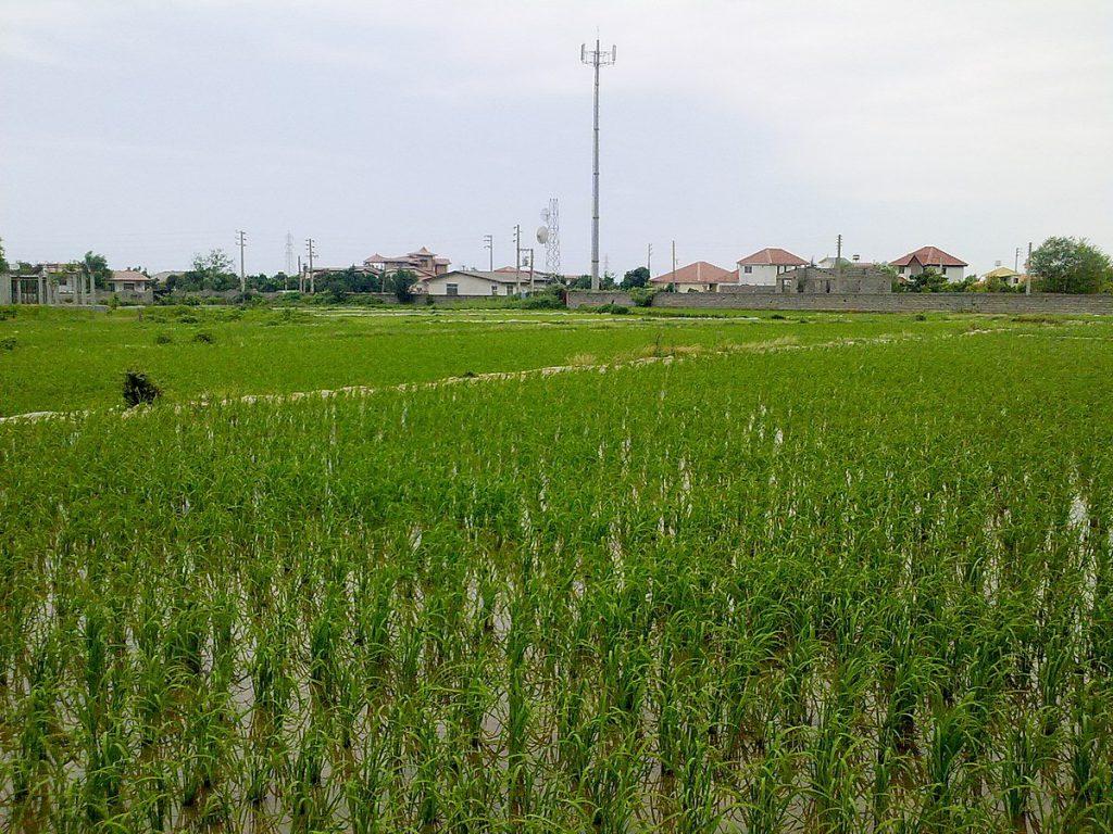 زمین کشاورزی مرغوب
